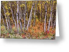 Wonderful Woods Wonderland Greeting Card