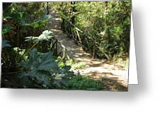 Wood Bridge On A Trail Greeting Card