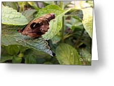 Wood Butterfly Greeting Card