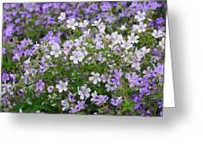 Wood Cranesbill Field Greeting Card