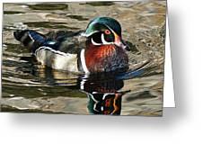 Wood Duck 1 Greeting Card
