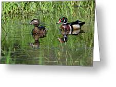 Wood Duck Couple Greeting Card