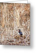 Wood Duck Drake 2 Greeting Card