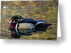 Wood Duck Drake Greeting Card