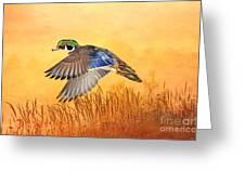Wood Duck In Flight Greeting Card