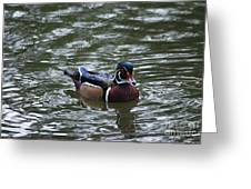 Wood Duck Male 20130924_258 Greeting Card