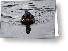Wood Duck Male 20130924_268 Greeting Card