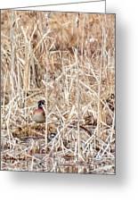 Wood Duck Mates 2018 Greeting Card