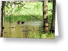 Wood Duck Mates Greeting Card