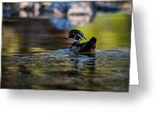 Wood Duck On Mill Creek Greeting Card