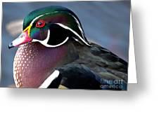 Wood Duck On The Delaware - 27fullsizerender Greeting Card