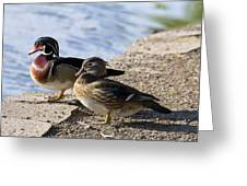 Wood Duck Pair By The Lake Greeting Card
