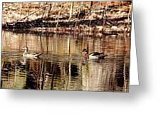 Wood Ducks Enjoying The Pond Greeting Card