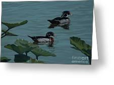 Wood Ducks On Lake Morton Greeting Card