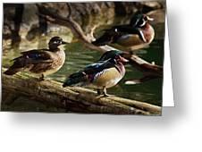 Wood Ducks Posing On A Log Greeting Card