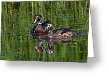 Wood Ducks Greeting Card