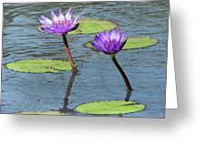 Wood Enhanced Water Lilies Greeting Card