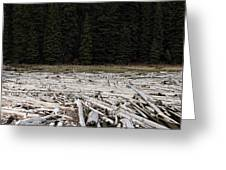 Wood Forest At Duffy Lake Greeting Card