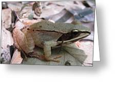 Wood Frog  Greeting Card