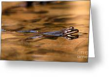 Wood Frog Reflecting On Golden Pond Greeting Card