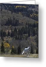 Wood River White Stallion-signed-#1839 Greeting Card