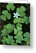 Wood Sorrel Flower Greeting Card