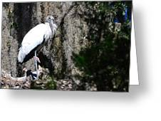 Wood Stork And Moss Greeting Card