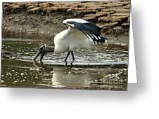 Wood Stork Fishing Greeting Card