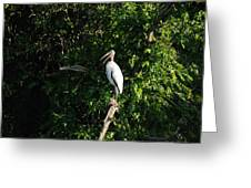 Wood Stork-out On A Limb Greeting Card