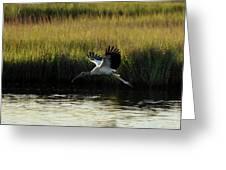 Wood Stork Winged Flight Greeting Card
