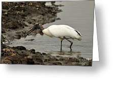 Wood Stork With Fish Greeting Card