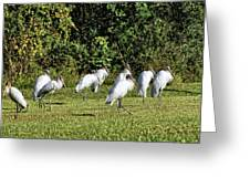 Wood Storks 2 - There Is Always One In A Crowd Greeting Card