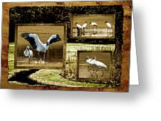 Wood Storks Of Oak Grove Island Greeting Card