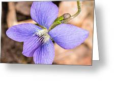 Wood Violet - Full View Greeting Card
