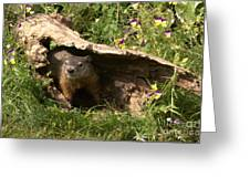 Woodchuck Ready For Spring Greeting Card