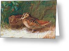 Woodcock In The Undergrowth Greeting Card