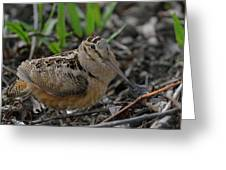 Woodcock In The Woods Greeting Card