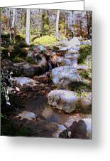 Wooded Blue Brook Greeting Card