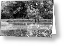 Wooded Pond Greeting Card