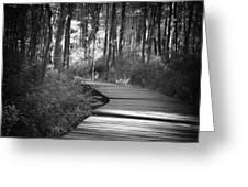 Wooded Walk Greeting Card