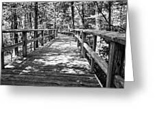 Wooden Boardwalk B Greeting Card
