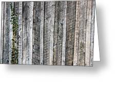 Wooden Fence And Ivy Greeting Card