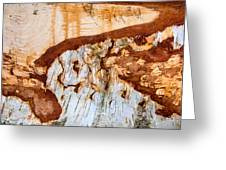 Wooden Landscape - Natural Abstract Structure Greeting Card
