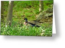 Woodies Feeding Greeting Card