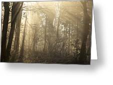Woodland Glade 2 Greeting Card