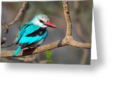 Woodland Kingfisher Halcyon Greeting Card