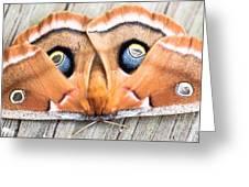 Woodland Moth Greeting Card