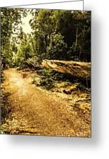 Woodland Nature Walk Greeting Card
