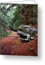 Woodland Path Naugatuck State Forest Greeting Card