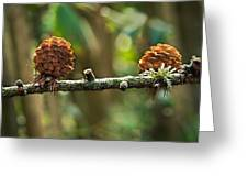 Woodland Pine Cones Greeting Card